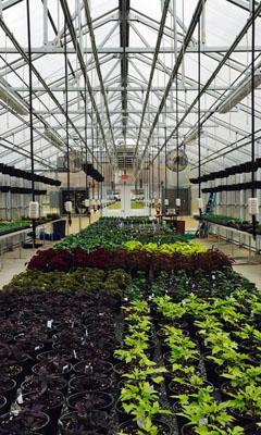 Custom Jaderloon Greenhouses by The Greenhouse Company
