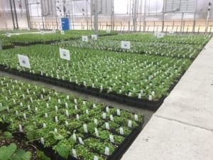 Interior Jāderloon Greenhouse at The Growers Exchange